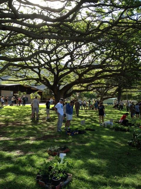 Tree Give 2012